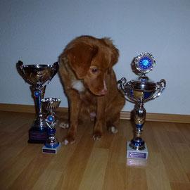"CABIB VV Wesermarschcup Siegerin 2013, CABIB VV Eurocup Siegerin  2013 , Nova Scotia Duck Tolling Retriever ""Mariendals Red Nose Snoki Nita"""