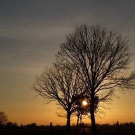 Abendsonne Anfang März 2013