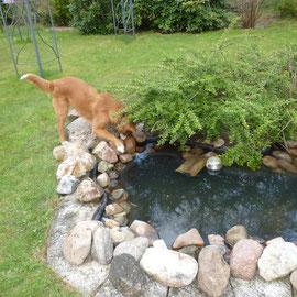 Sitka untersucht erst einmal ein Teichbecken