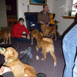 "Welpentreffen Nova Scotia Duck Tolling Retriever ""Mariendals Red Nose"""