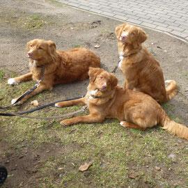 Brave Hunde in der Stadt! Nita, Sitka und Felix