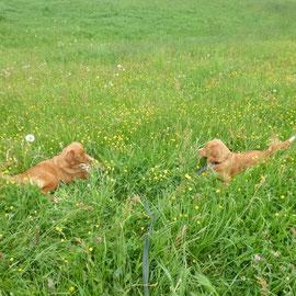 Kurze Pause im hohen Gras