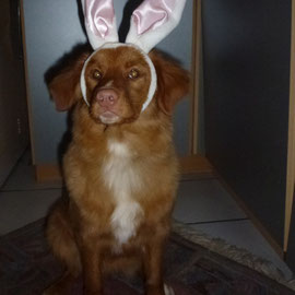 Nita auf einer Osterkarte würde sich auch super machen! So schöne Ohren!