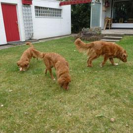 Nita, Sitka und Felix