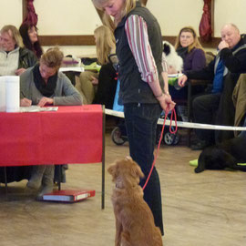Braver, aufmerksamer Hund!