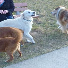 Unterwegs trifft man natürlich oft andere Hunde