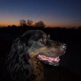 Mein schönster, schmusigster großer Nasenbär Rudi !