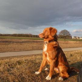 Ostern 2013 Sitka in der Sonne und hält auch mal still für ein schönes Foto