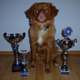 "CABIB VV Wesermarschcup Siegerin 2013, CABIB VV Eurocup Siegerin  2013,  Nova Scotia Duck Tolling Retriever ""Mariendals Red Nose Snoki Nita"""