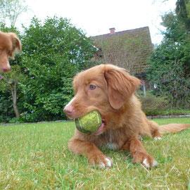 Ihr Blick ist eindeutig! Das ist und bleibt mein Ball!