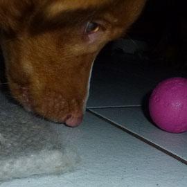 Noch ein hypnotischer Blick  auf den Ball :-)