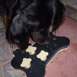 Rudi entdeckt Intelligenzspielzeug und macht mit! Phantastisch! Der große mit 14 Jahren!