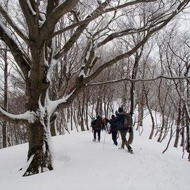駒ケ岳西尾根を通って