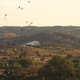 Taubenschläge gibt es hier im Ostalgarve in sehr großer Zahl, viele Portugiesen pflegen die Zucht und so fliegen immer wieder große Schwärme über uns hinweg