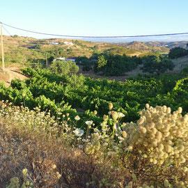 Blick in ein Tal mit einem kleinen Hof, der von einem alten Herrn ganz alleine bewirtschaftet wird, es wird langsam von der Sonne erobert ... und die wilde Möhre ist auch wieder dabei  :)