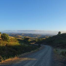 früher Morgen und tiefstehende Sonne, Licht und Schatten und ein Fernblick über die Hügelkette ... wunderbar - Nico und Luke sind ganz vorne auf dem Weg auch noch zu sehen, wie immer schon vorausgelaufen