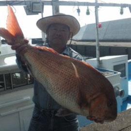 完全ふかせ釣り福井玄達釣り船遊漁船龍神丸 完全ふかせ釣りで龍神丸船長が真鯛87センチ8,8キロを釣りました
