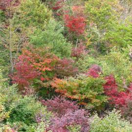 9期の森の広葉樹が揉みだす美しい色に囲まれ、今年も皆で汗を流し整備したことを振り返りました