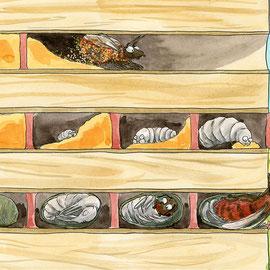 Illustration Mauerbiene Entwicklung