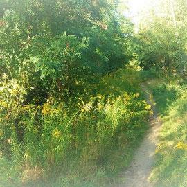 Der Spazierweg entlang der Gleise...