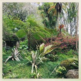 Quinta da Regaleira - Végétation luxuriante © Sandrine Tellier