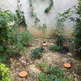 Appropriation simple des murs du jardin avec des grimpantes