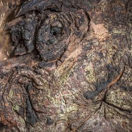 K_No.10_Tree Scape