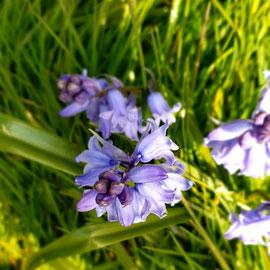 H_No.15_Spring Time