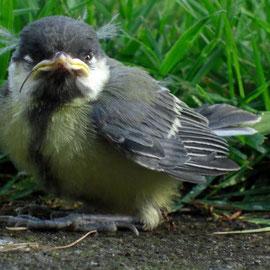 Nestflüchtling