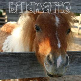 520.t.-pony