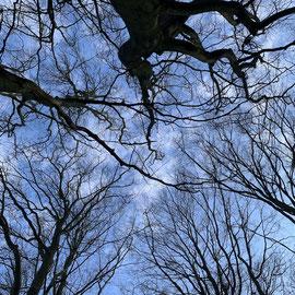 schlaubatz - Philosophieren im Wald