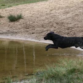 2007 Wasserspiele