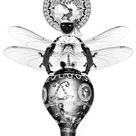 C. Collao, Libellefrau