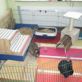 карликовые кролики содержание