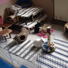 питомник кроликов весна Тула Москвина Анна карликовые кролики