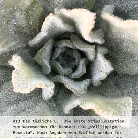 Gabriele Schettler, Das tägliche C - Pflanzenlust