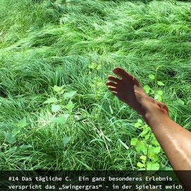 Gabriele Schettler, Das tägliche C - und ab ins Gras