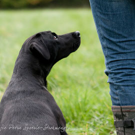 Ivy bei Station 3 - Darf ich nun endlich?!    (c)Hundefotografie Petra Spoerle-Strohmenger