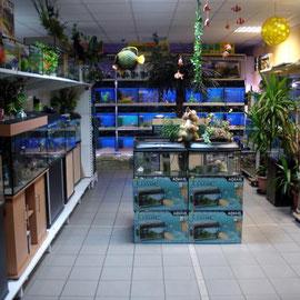 Aquarien Ausstellung 1 Zoo Kellner