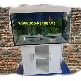 Aquarien Ausstellung 2 Zoo Kellner