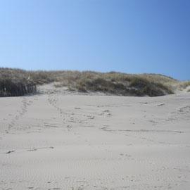 Der Strand von Wangerooge