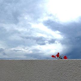 Mauerblümchen in Paquera