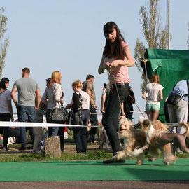 Выставка китайских хохлатых собак фото