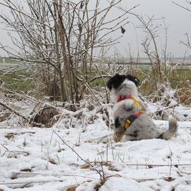 Schnee fand Blue lustig