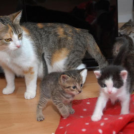 Bei steffi-hilft wartet diese Katzenfamilie auf ein vorübergehendes Zuhause.  (Foto: Barbara Zabka)