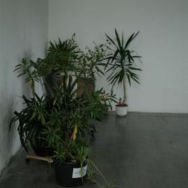 Die vorhandenen Pflanzen werden einbezogen.