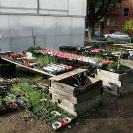 """Gewächshaus und """"Nursery"""" für die Pflanzen, die bald in die Beete kommen"""