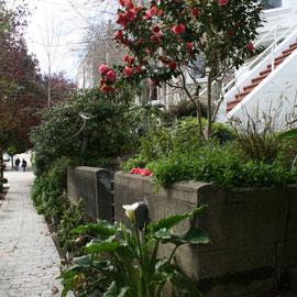 die meisten Gärten, die wir heute sehen, sind sehr gepflegt,.