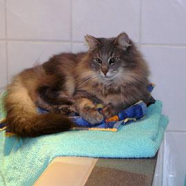 Im Bad ist es doch am wärmsten! Fee im November 2010