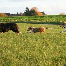 Wilde Jagd :-) Murphy, Bootsie, Sammy